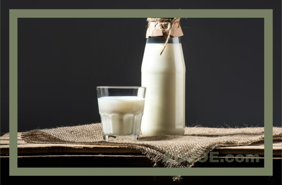 What is Camel Milk and Should I be Drinking it?